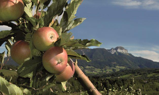 Fruits de Savoie : une branche à découvrir