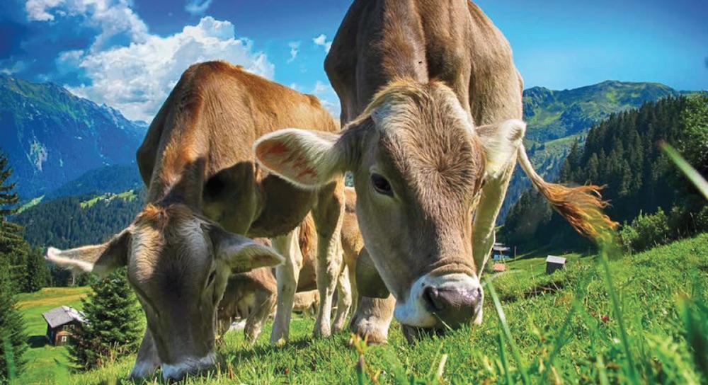 Agriculture : le coût du modèle suisse pointé du doigt