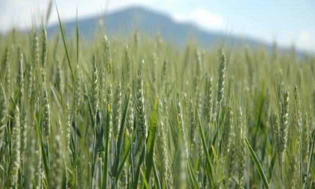 Chambre d'agriculture: qui vote, qui se présente et que pèse l'agriculture locale aujourd'hui?