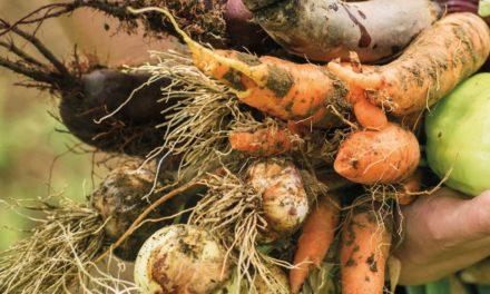 Agriculture bio : un jour mon aide viendra