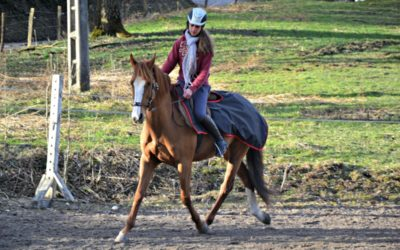 "Le plan ""ambition cheval"" en selle"