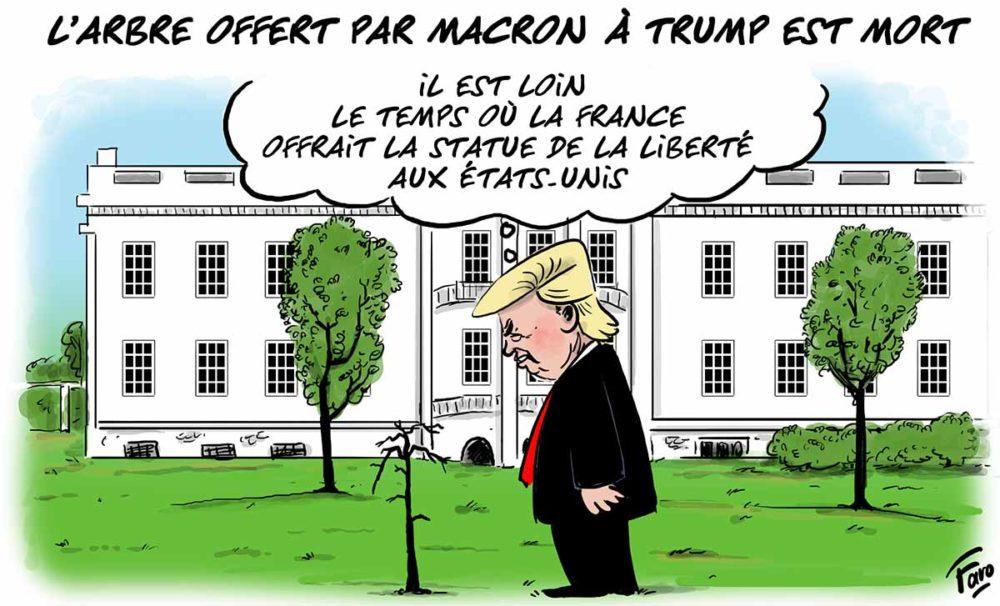 Le chêne offert par Macron à Trump est mort, par Faro