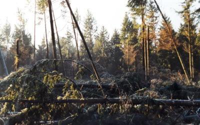 Un plan d'urgence de 800 000 euros pour la forêt