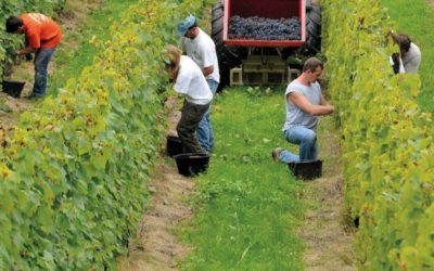 """Viticulture : objectif """"Haute Valeur Environnementale"""""""