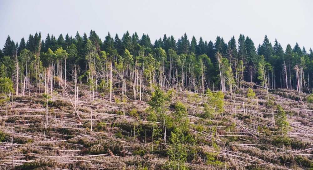 Claudie  Blanc, Directrice de Savoie Mont Blanc Tourisme : « la parole se libère  sur l'urgence climatique »