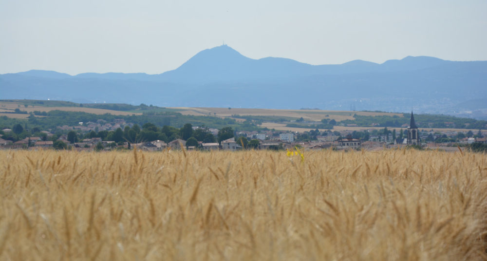 Céréales : + 10 % de surfaces cultivées en bio dans la région
