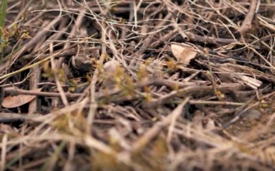 """Vitivalo : un projet de compost """"écolo-raisinné"""""""