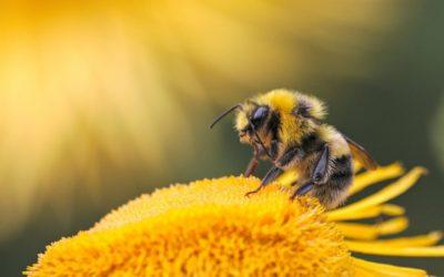 Du savon au secours des abeilles