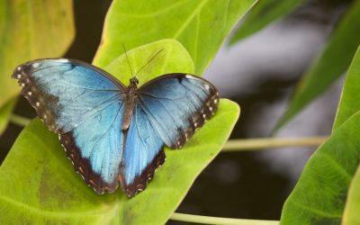 Biomimétisme : quand l'industrie s'inspire du vivant